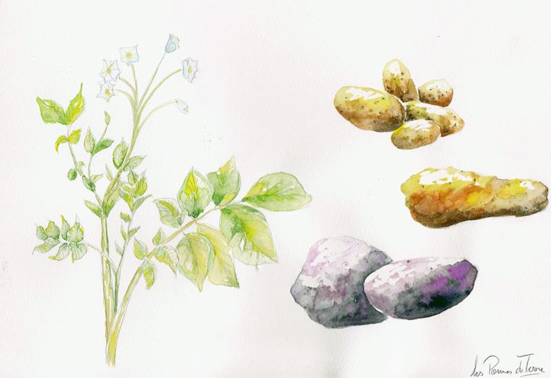 creation-graphique-graphisme-aquarelle-panneau-enseigne-manosque-publicite-manosque